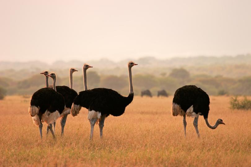 Parque Nacional Marakele