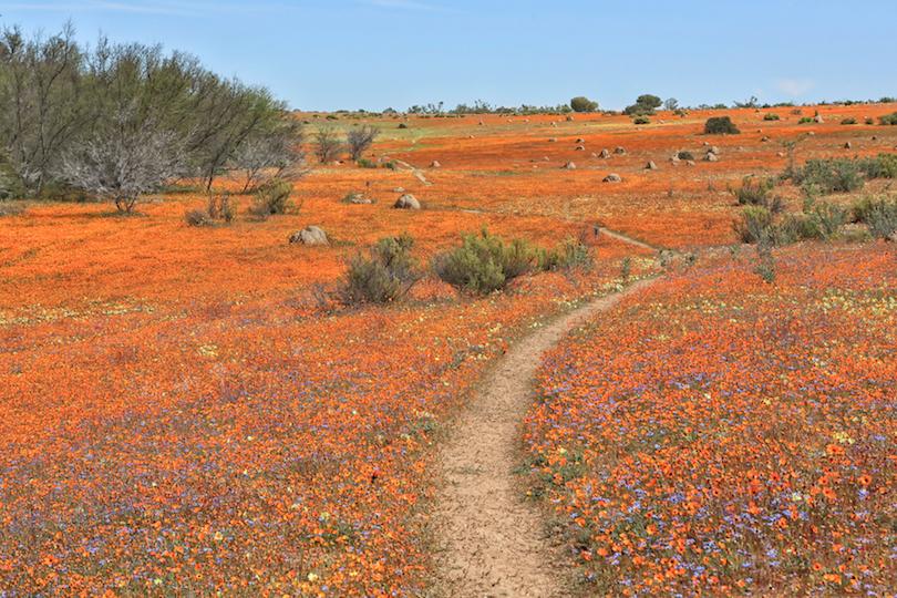 Parque Nacional Namaqua