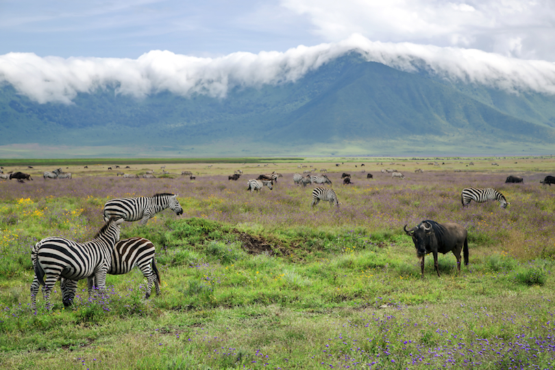 Ngorongoro Conservation Area Park