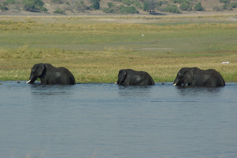 Thanks for must see in the caprivi strip something is