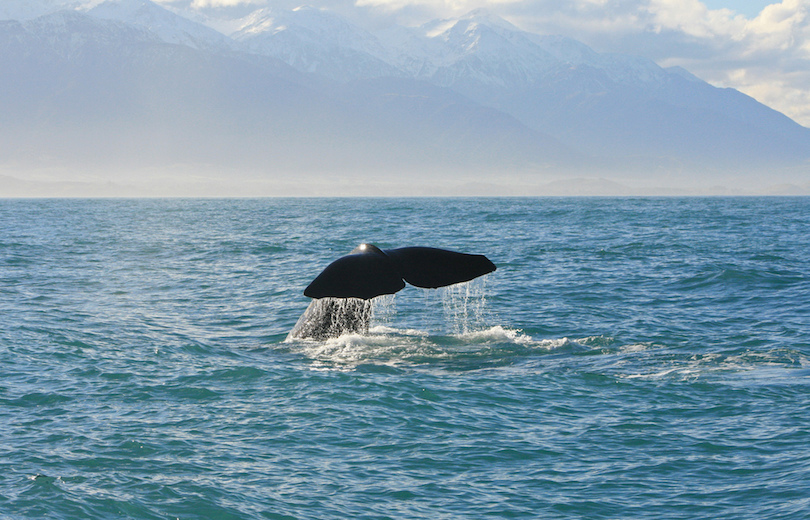 #1 of Best Whale Watching Tours