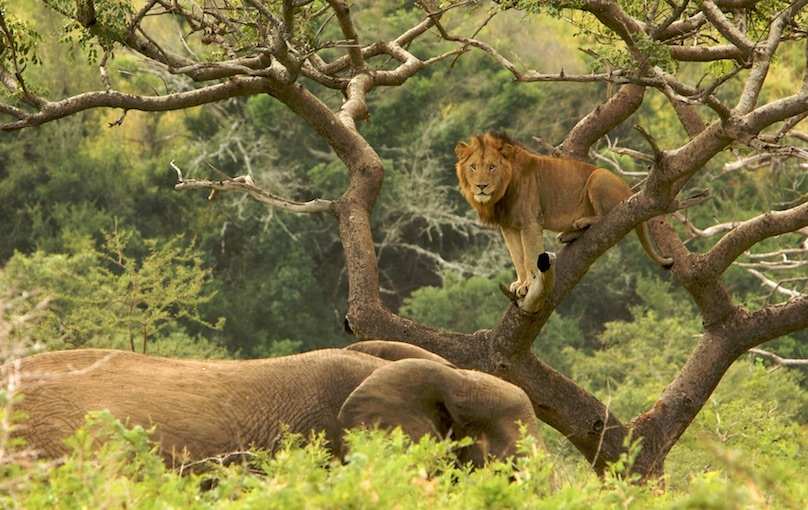 10 top tourist attractions in south africa with photos map hluhluwe umfolozi game reserve publicscrutiny Images